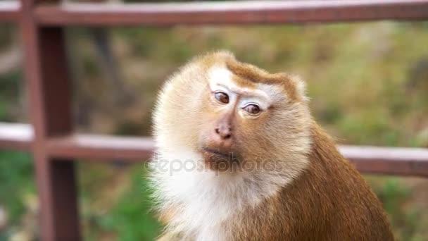 Monkey Eating Chips