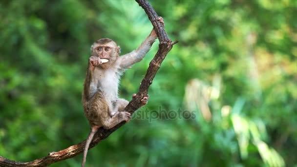 roztomilé opice visící na liana v nížinných deštných pralesů