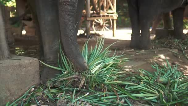 Velcí sloni jíst rostliny v safari zoo