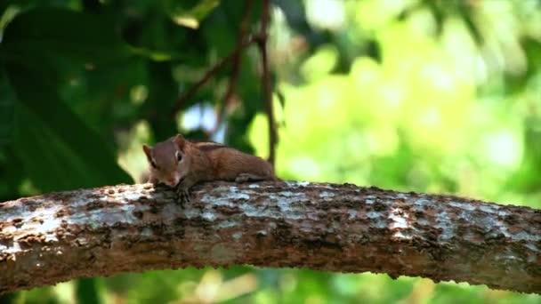 Többek között a fák a dzsungelben vicces Hosszúfarkú királymókus