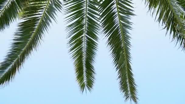Tropické palmové ratolesti