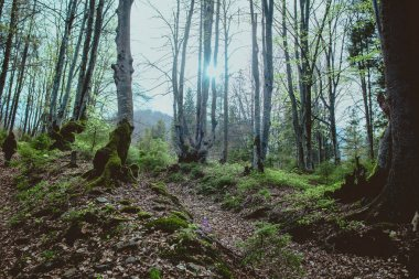 Landscape of great mystery forest in spring in the cloudy day