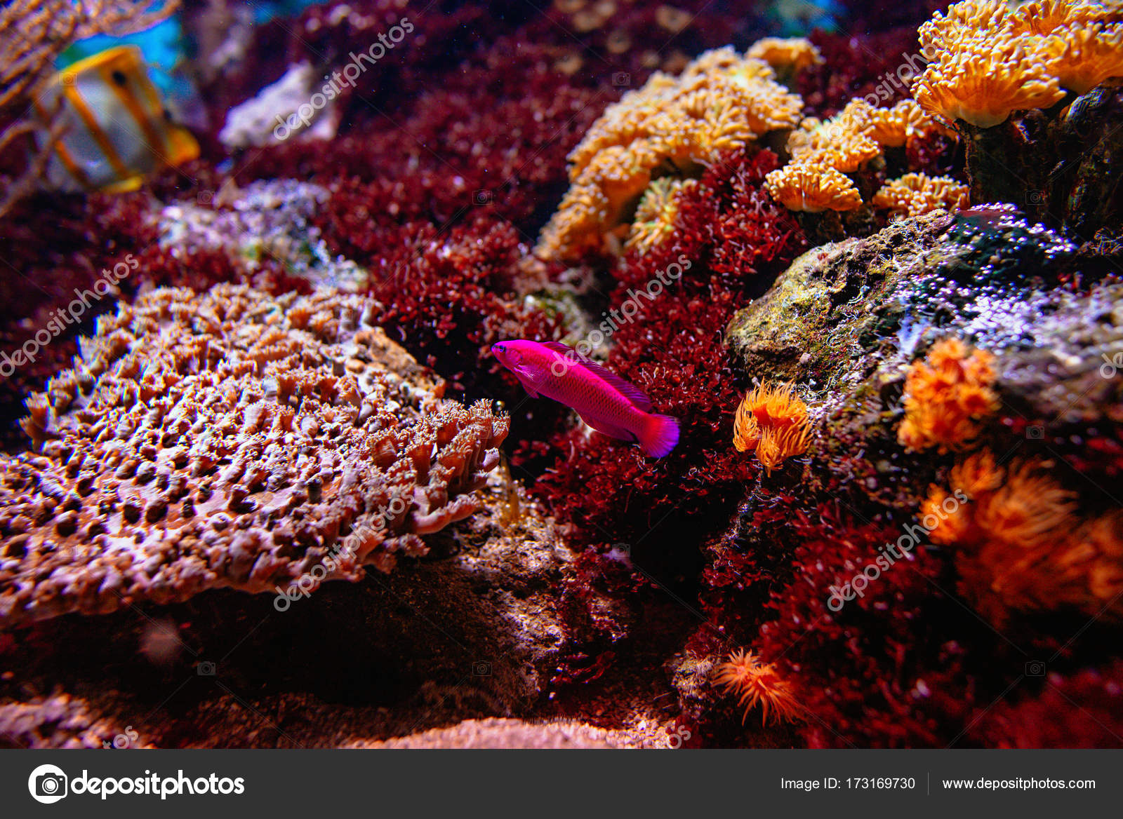 Colorful tropical fishes and coralls underwater in the aquarium ...