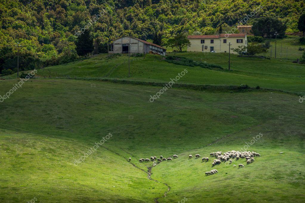 Querceto, Montecatini Val di Cecina, Pisa - Italy