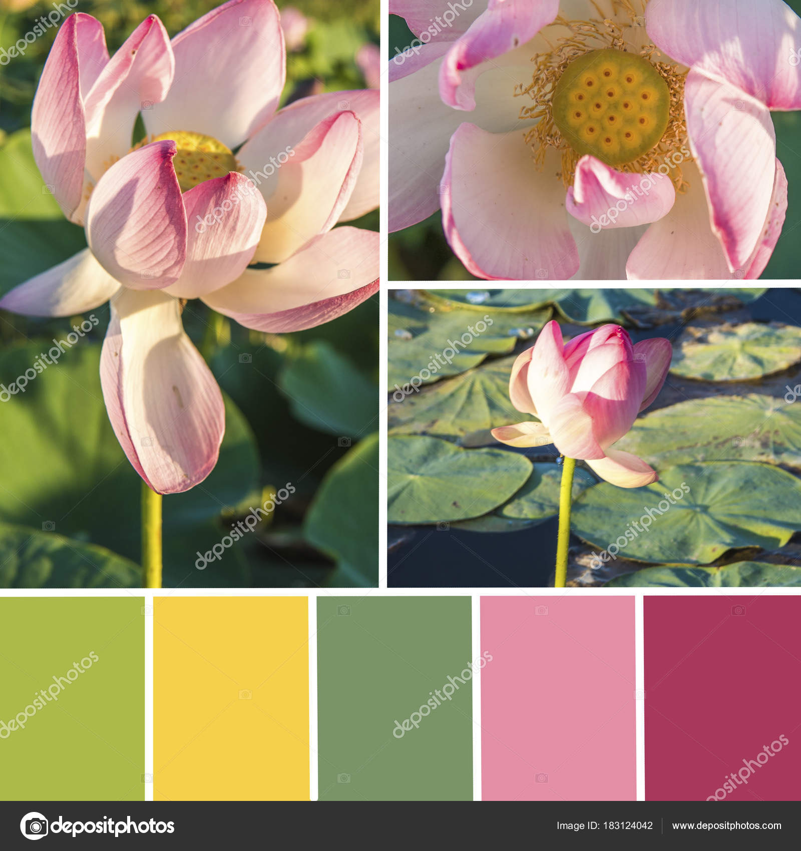 Palette of lotus flowers color matching palette stock photo palette of lotus flowers color matching palette stock photo izmirmasajfo Images