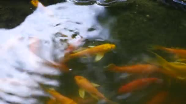 čínské rybník s plovoucí ryby a kameny