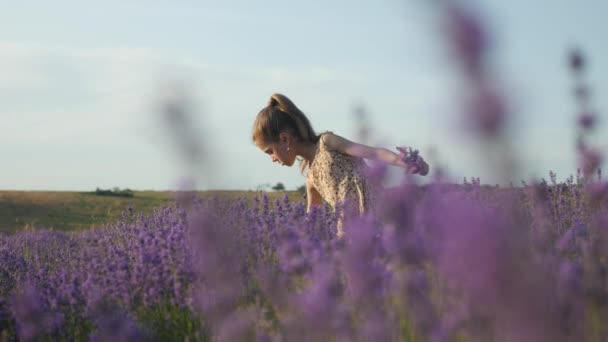 cute young girl stands outdoors in a field of flowers and collects a bouquet of lavender at sunset