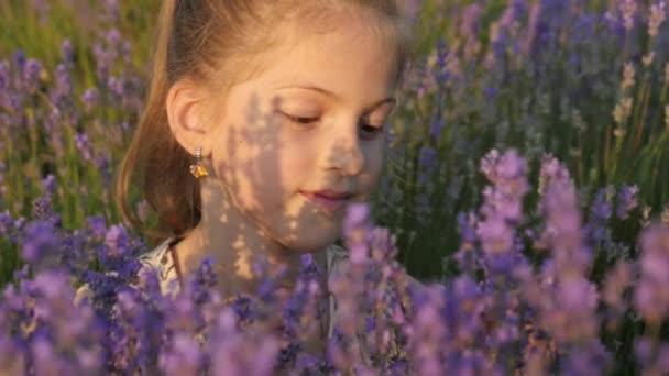 portré egy szép kis lány ül a levendula bokrok, ami tép a virágok és az illat a sugarak meleg nyári nap szippantás.