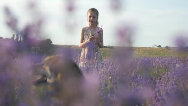 little girl with her dog stands in a field of flowers collects a bouquet of lavender and talks to the dog, scene lit by the bright evening sun of Provence