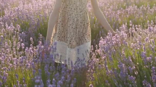 close-up hand little girl lightly touching lavender flowers in sunset summertime