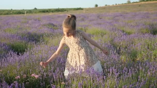 kis lány nyári vakáció. levendula virág gyűjteni készletben, vidéken