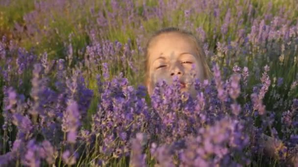 roztomilá holčička hraje keře levandule v přírodě. Po dobu letních školních prázdnin. květiny kvetou v sezóně letní čas.