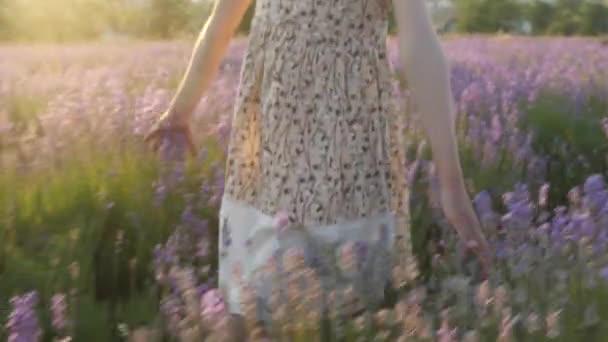 pojetí krásy a zdraví. Detail části rukou malou holčičku. letní šaty chodí přes levandulová pole při západu slunce a jemně dotýká květiny s prsty. krásná idylická scéna