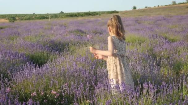 malá hezká dívka v krásné šaty na letní prázdniny. květy levandule shromažďovat ve venkovské krajině