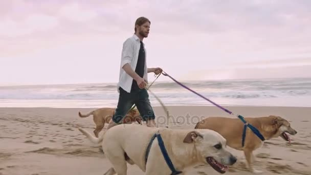 man walking with dogs on beach