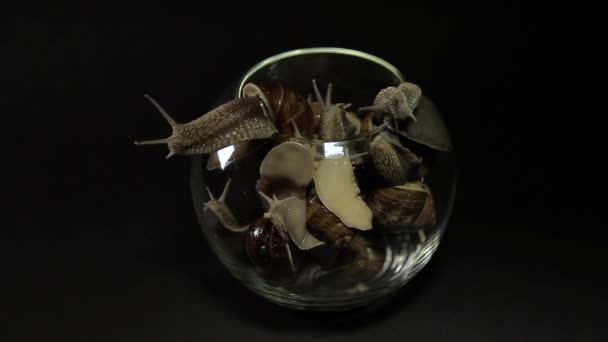 Snails crawl out of a glass vase on a black background