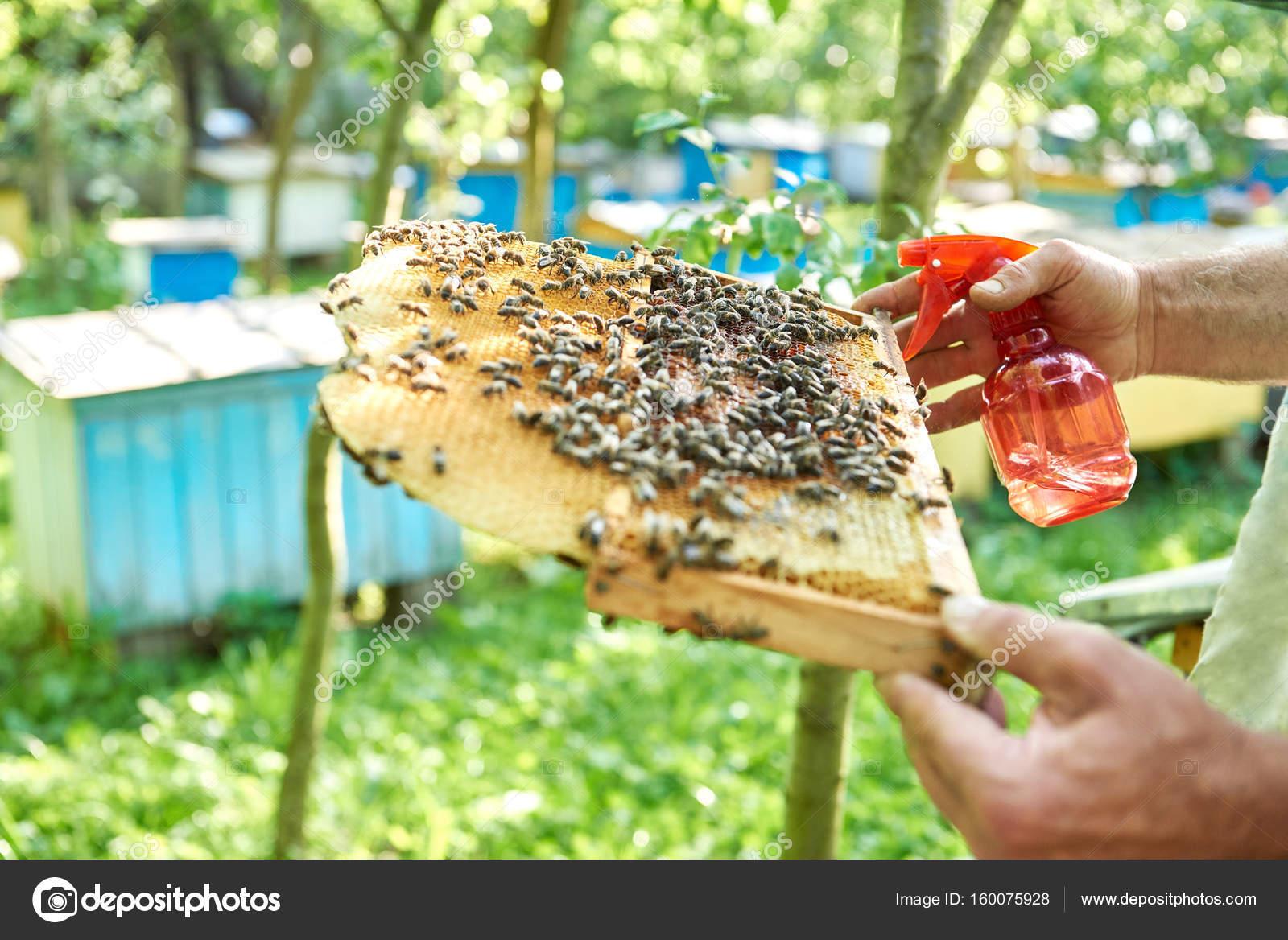 Imker arbeiten in seinem Bienenhaus mit Wabenrahmen — Stockfoto ...