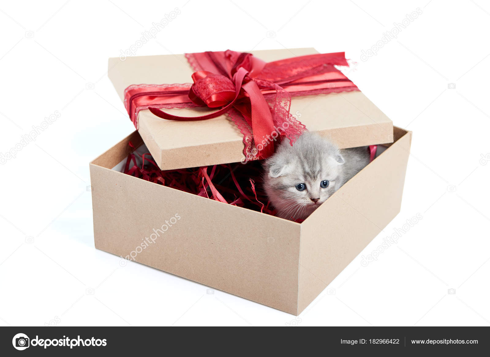 Little Grey Adorable Kitten Looking Out Of Decorated Birthday Box Being A Cute Present For Someone Small Gray Funny Charming Kittycat Amusing Playful