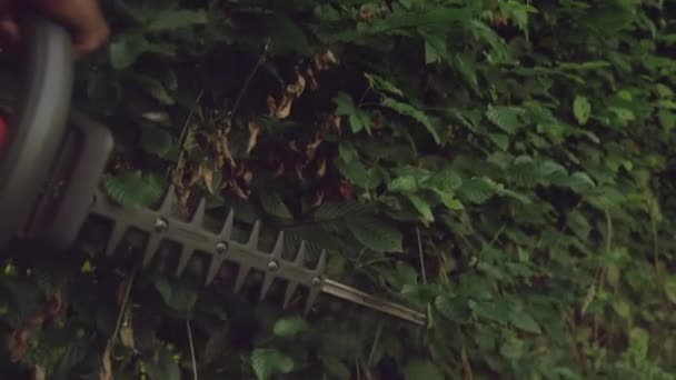 Close up of gargener trimming hedge.