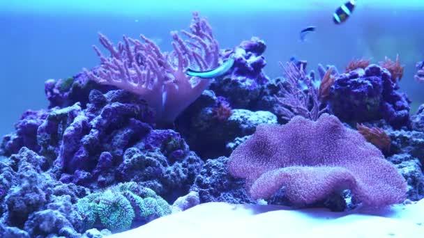 Korálový útes akvárium s exotickými rybami.