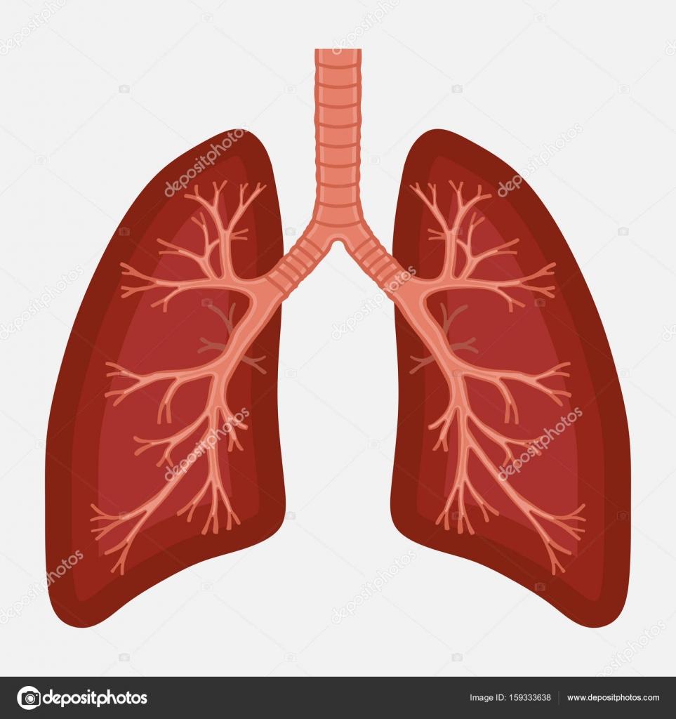 diagrama de la anatomía del pulmón humano. cáncer respiratorio ...