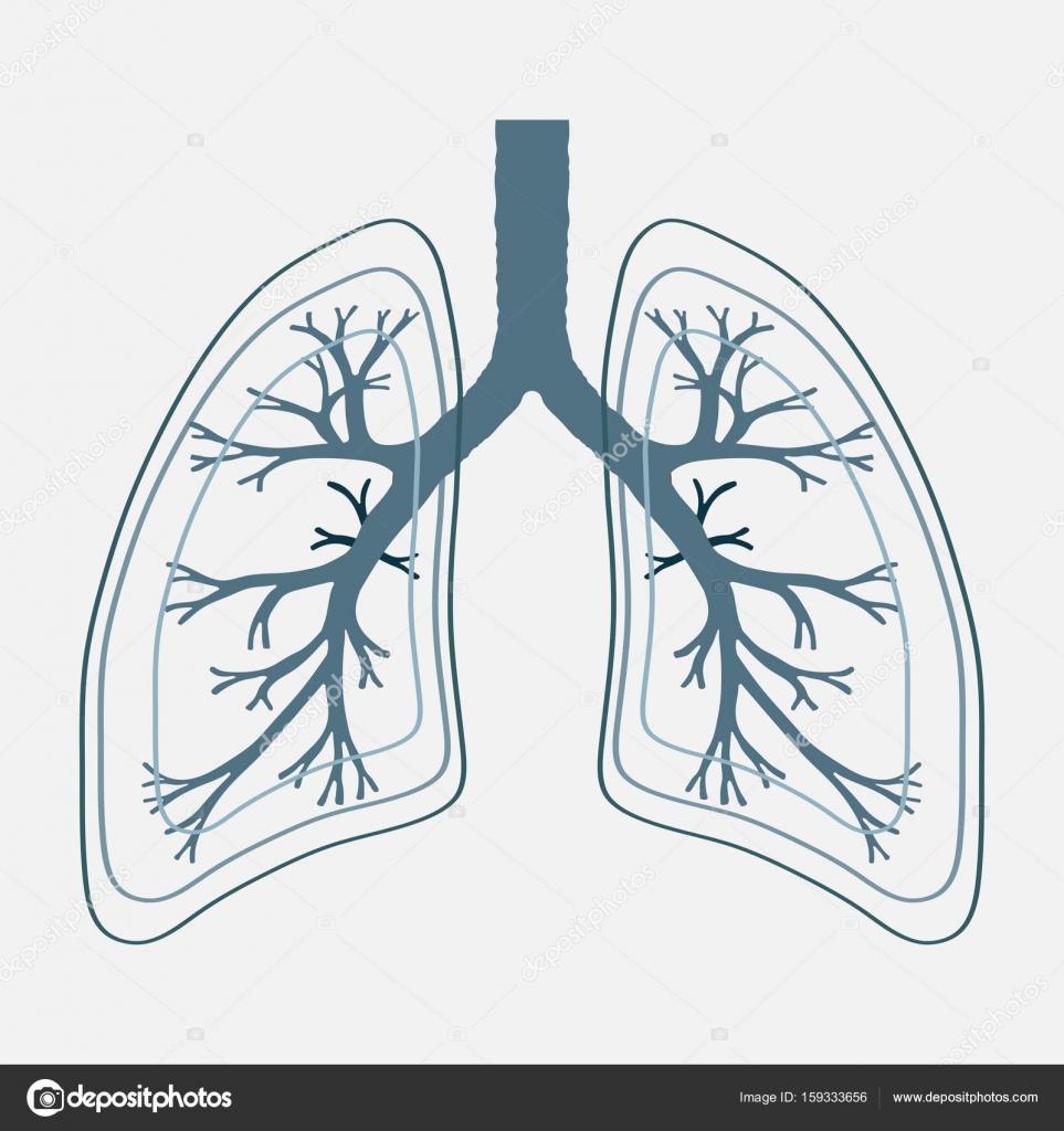 Akciğer Anatomisi Illüstrasyon Insan Hastalık Solunum Kanser Gra