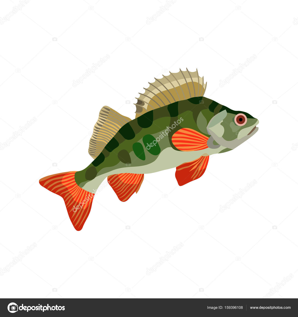 freshwater fish perch, hishnik pond, underwater — Stock Vector ...