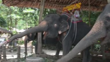 Girl feeding the elephants