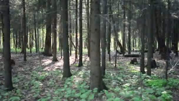 Elmegy a komor formák, sötét nyári erdőben. Elmegy az erdő