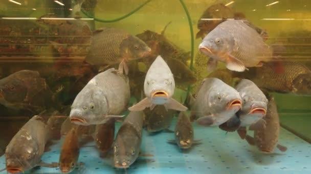 Halak az akváriumban a szupermarket pultnál.