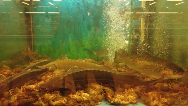 Fische im Aquarium an der Supermarkttheke.