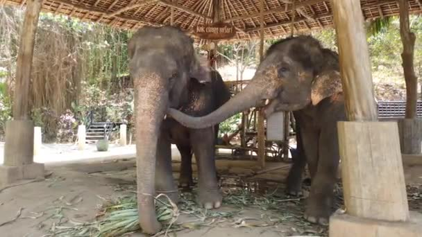 Elephants stand in a enclosure at an elephant farm in Thailand, Phuket