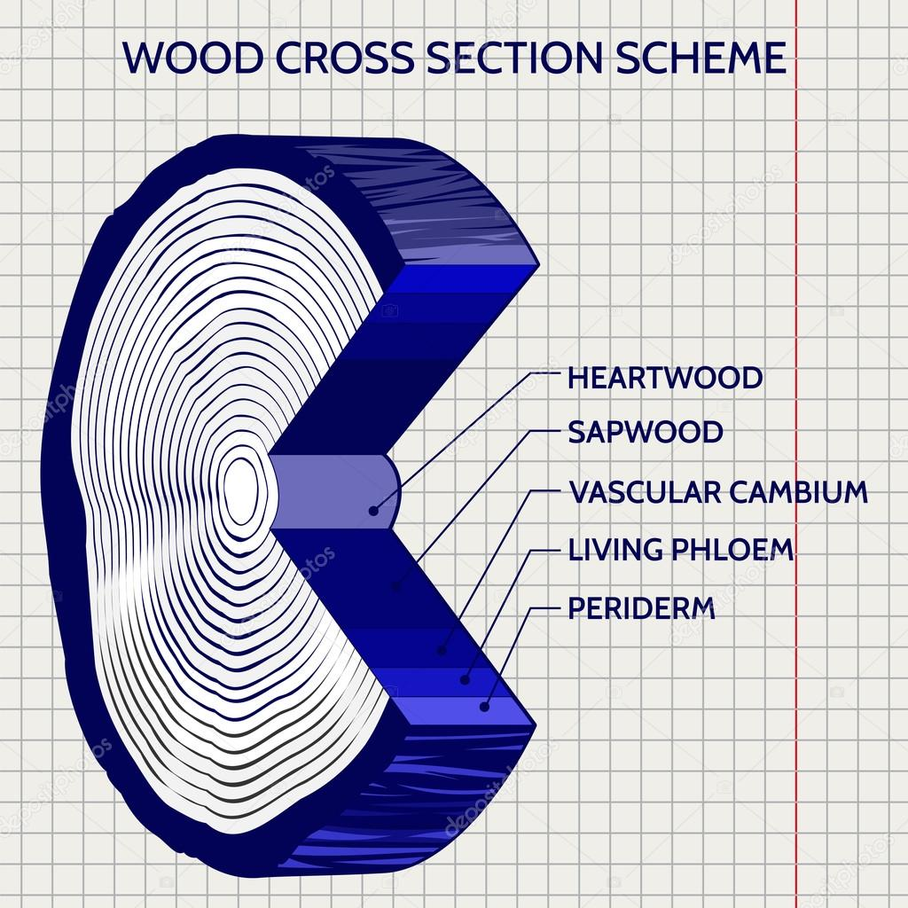 Sketch of wood cross section scheme