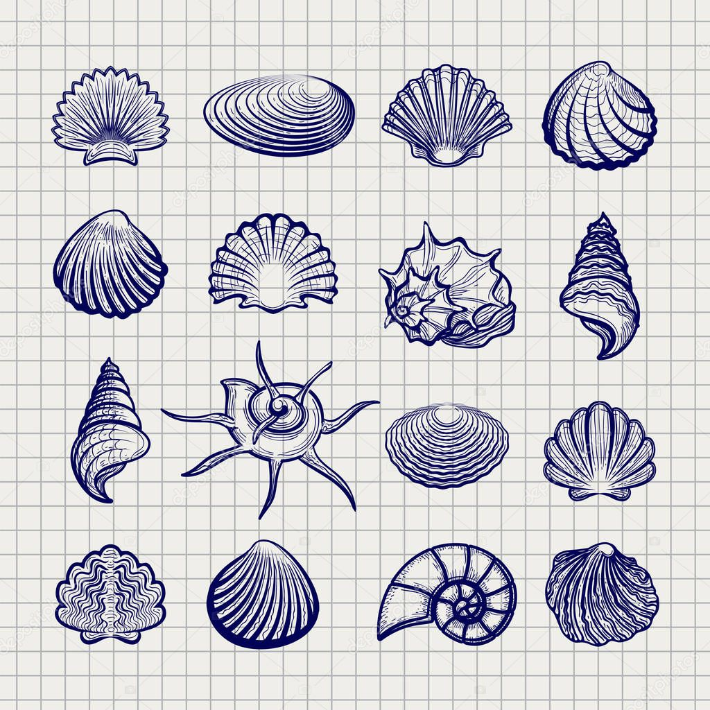 Ball pen sketch sea shells