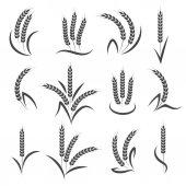 Photo Wheat or barley ears branch