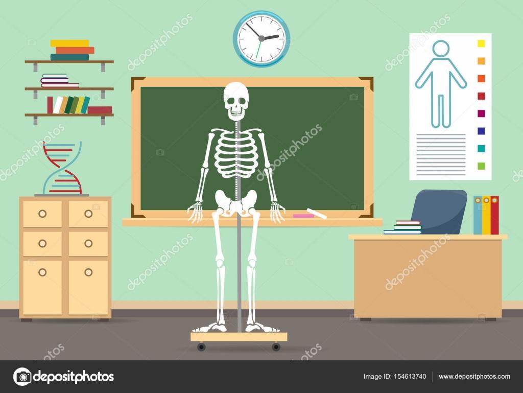 Anatomie-Unterricht-Interieur — Stockvektor © vectortatu #154613740