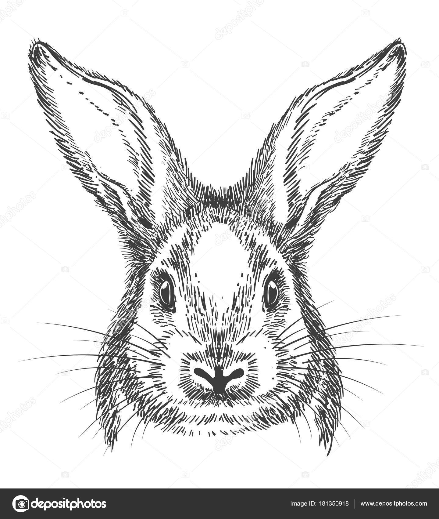 Line Drawing Of Rabbit Face : Vintage hand drawn bunny face sketch — stock vector