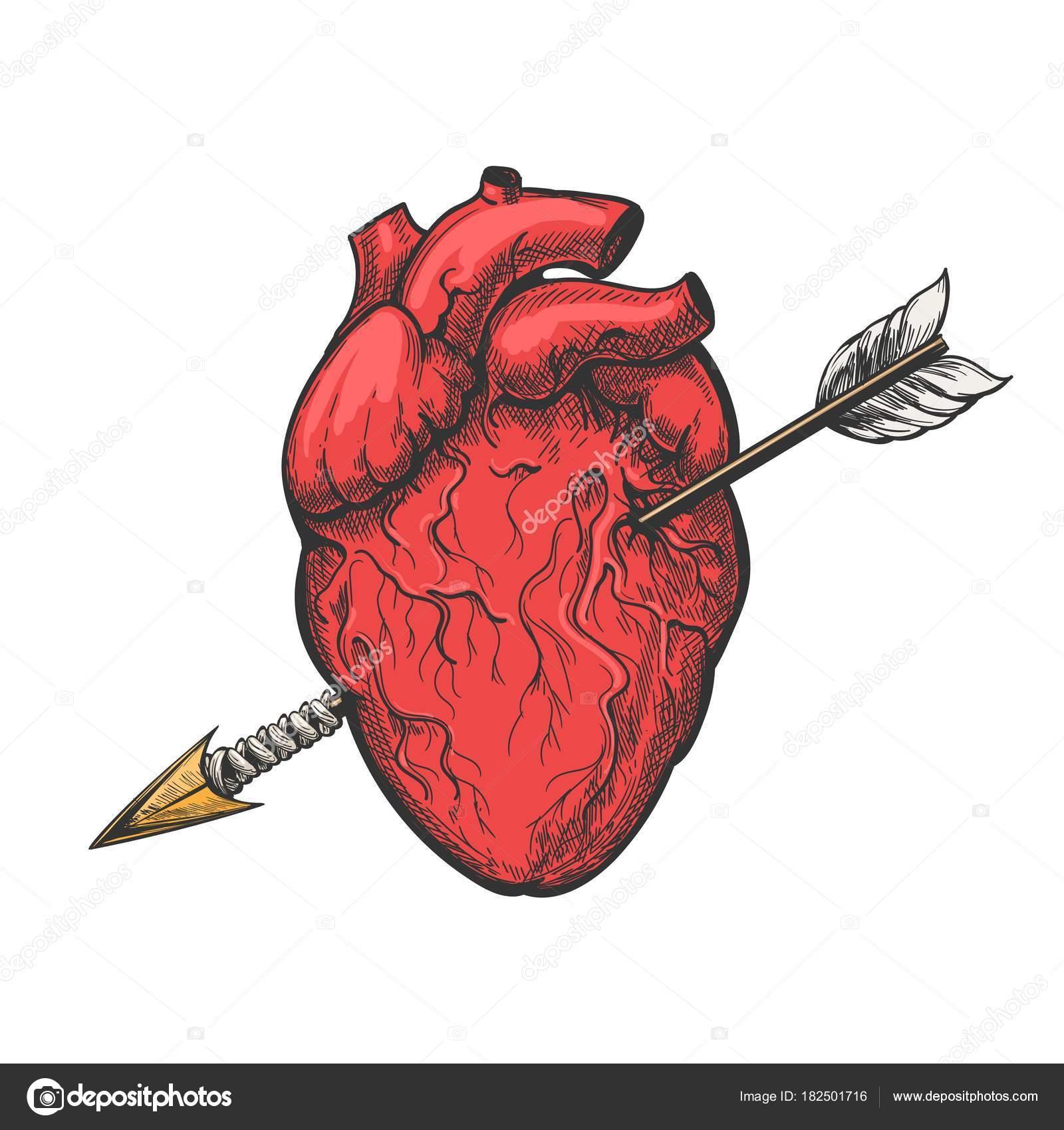 Coraz n humano con la flecha del tatuaje grabado vector for Fotos del corazon