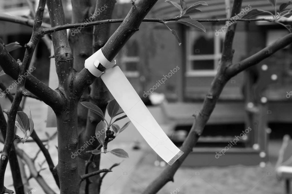 A photo of a tree growing in a nursery, rare plants, a ribbon for an inscription, a tag