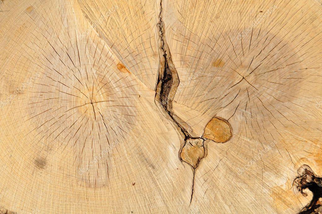 Wood texture. Tree, stub, wood, invoice, nature, cutting down