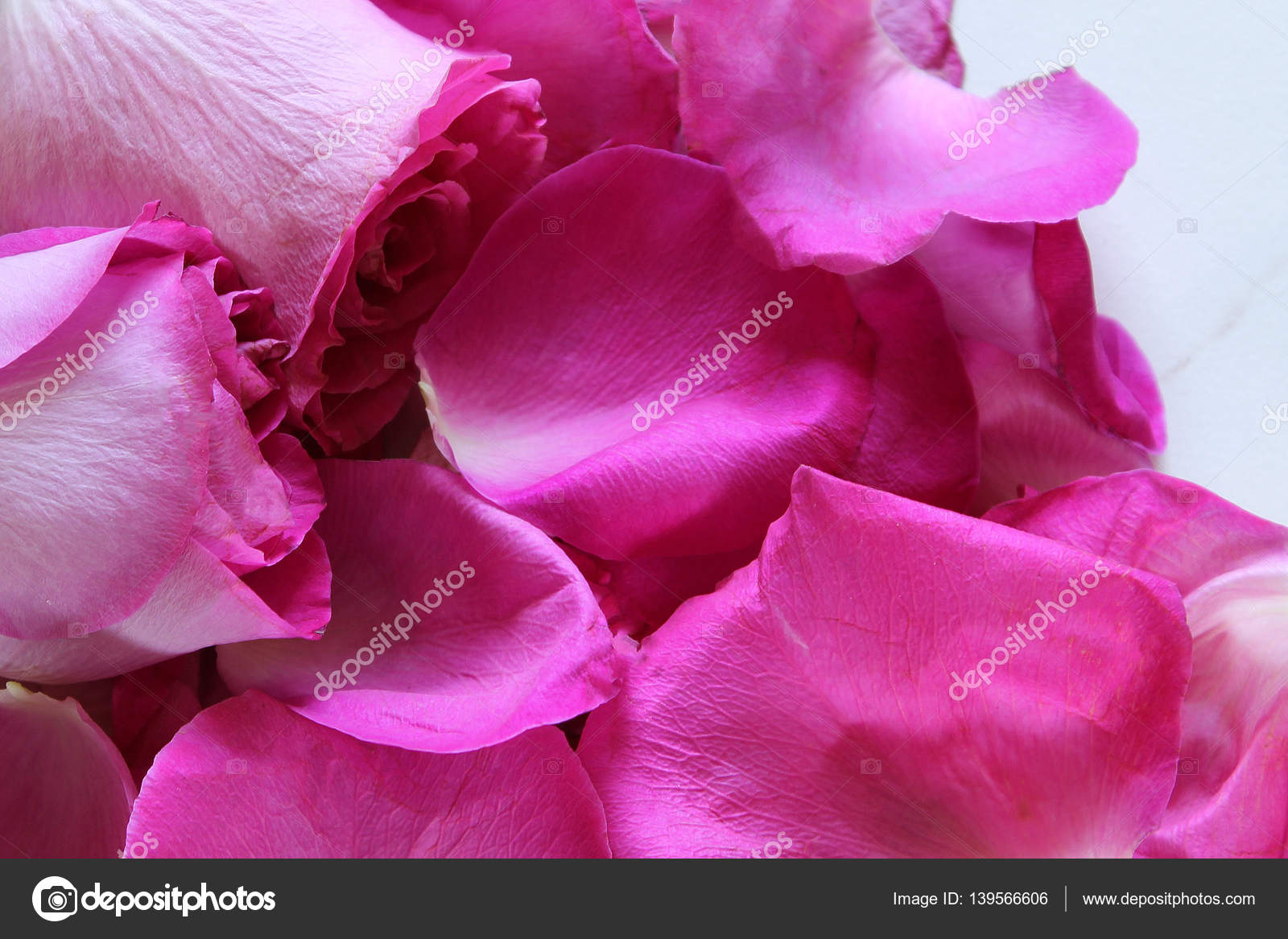 Fuschia rose petals stock photo mppllc 139566606 hot pink rose background photo by mppllc mightylinksfo