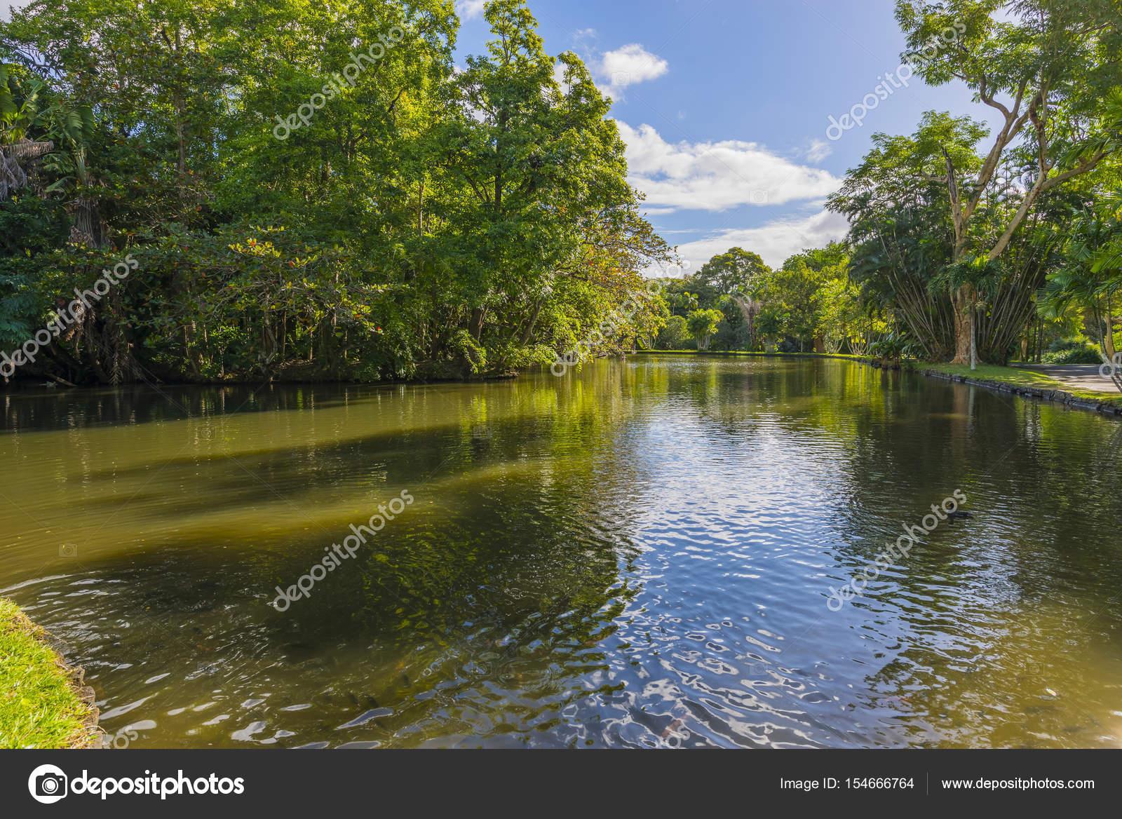 Stagno al giardino botanico di mauritius foto stock for Stagno giardino