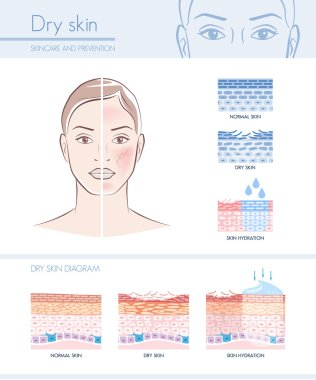 hydration infographic with skin diagram
