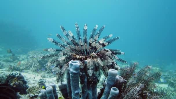 Egy korallzátony víz alatti világa. Leyte, Fülöp-szigetek.