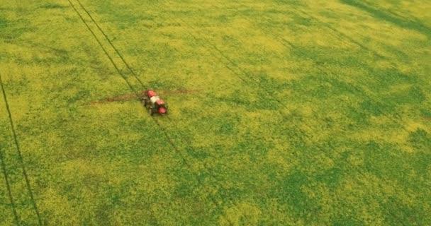 Volando sopra il campo con un Canola. Campo di grano raccolto di estate di spruzzatura del trattore di agricoltura