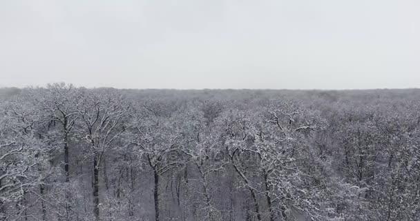 zimní Les ve sněhu