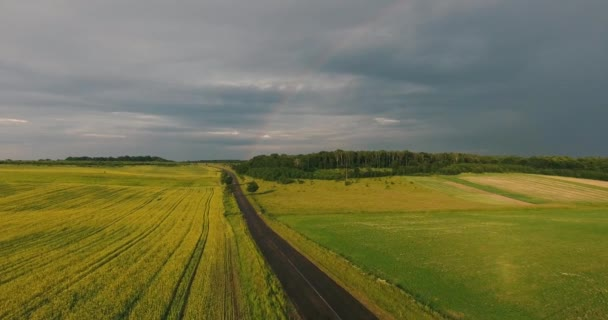 Field With Flowering Canola, Spring in the Rain and Rainbow