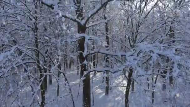 Zimní les letu ve sněhu