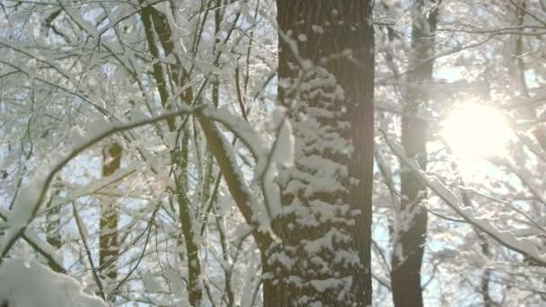 Ranní mráz zimní les přikrčil čarodějnice silná vrstva sněhu