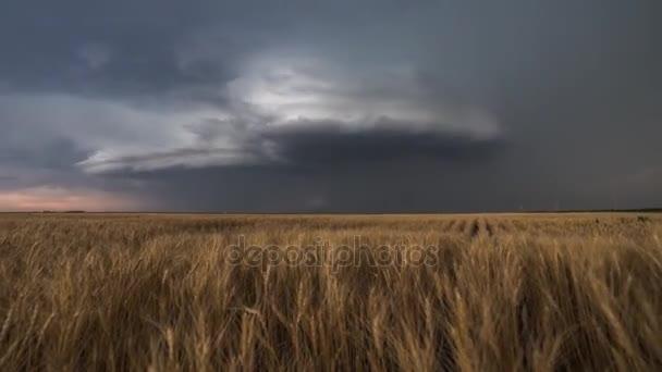Bouřky a nekonečné pšeničné pole. Ponuré letní počasí. Na obloze jsou husté, šedé